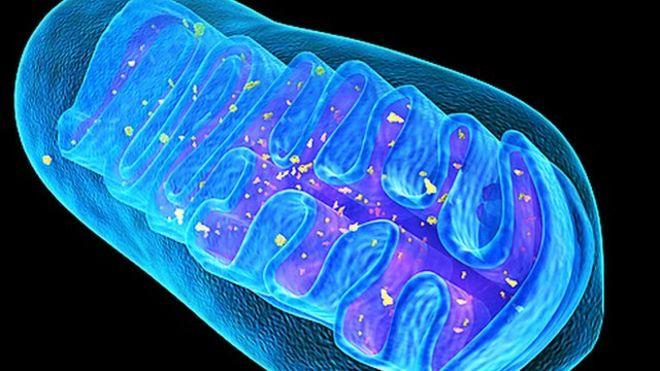 Mitochondria Case Study